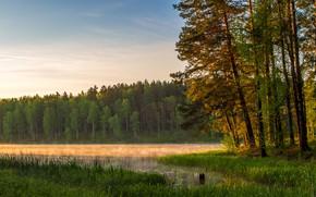 Картинка осень, вода, деревья, туман