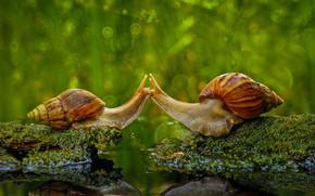 Картинка природа, улитка, поцелуй, раковина, Индонезия, Sambas Regency