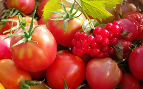 Картинка осень, ягоды, урожай, овощи, помидоры, сентябрь, огород, множество, калина, красный цвет