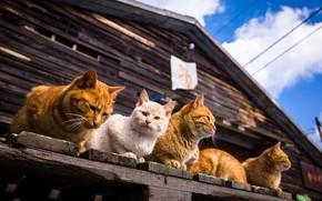 Картинка лето, дом, коты