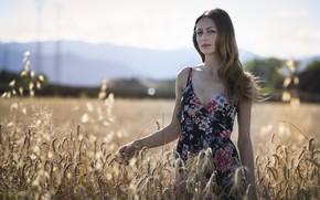 Картинка поле, лето, взгляд, лицо, модель, платье, красавица, колосья, Erika