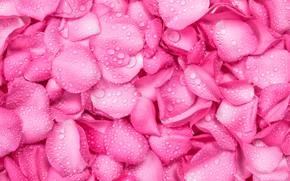 Картинка капли, фон, розы, лепестки, розовые, fresh, texture, pink, beautiful, petals, roses
