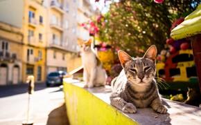 Картинка лето, тепло, улица, котейка