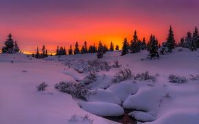 Обои зима, снег, деревья, закат, природа, вечер
