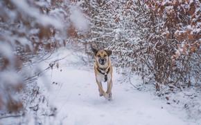 Картинка зима, снег, друг, собака, бег