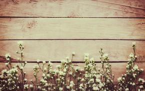 Картинка цветы, весна, white, белые, wood, blossom, flowers, spring