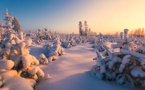 Обои зима, лес, снег, Финляндия