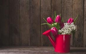 Картинка цветы, тюльпаны, лейка, Valeria Aksakova