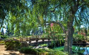 Картинка зелень, трава, солнце, деревья, ветки, пруд, парк, камни, листва, HDR, Калифорния, США, мостик, Лос-Анджелес, кусты