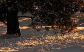 Картинка зима, свет, снег, дерево, утро
