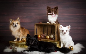 Картинка собаки, праздник, игрушки