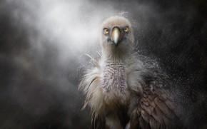 Картинка дождь, перья, клюв, птенец
