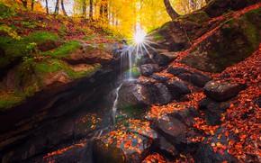 Картинка осень, лес, листья, солнце, лучи, деревья, природа, ручей, камни