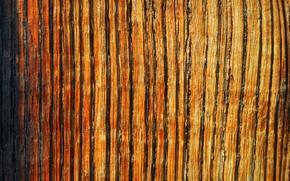 Картинка поверхность, дерево, цвет