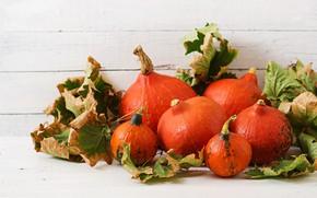 Картинка листья, тыквы, дары осени