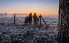 Обои зима, иней, поле, трава, солнце, лучи, пейзаж, природа, туман, дерево, рассвет, кони, утро, деревня, лошади, ...