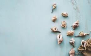 Картинка ракушки, summer, wood, marine, starfish, composition, seashells