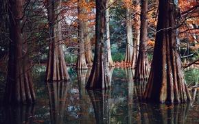 Картинка природа, озеро, река, заводь, мангровые деревья