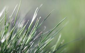 Картинка фон, весна, травинки