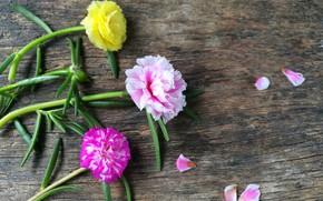 Картинка фон, Цветы, лепестки