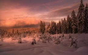 Картинка зима, лес, закат, туман