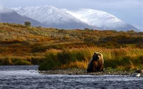 Обои my planet, nature, travel, боке, wallpaper., размытость, animals, природа, рыбалка выжидает момент, охота, река, лето, ...