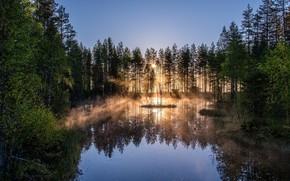 Картинка деревья, природа, вечер