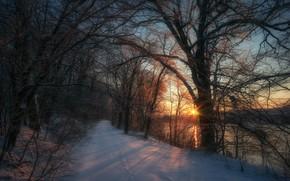 Картинка дорога, солнце, снег, деревья, закат