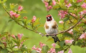 Картинка цветы, природа, дерево, птица