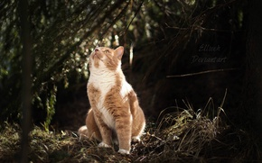 Картинка кошка, природа, by Ellieeh