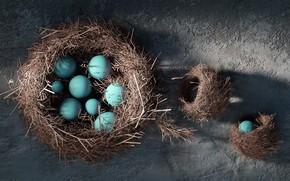 Картинка арт, кладка, гнездо, Farid Ghanbari, The Nest
