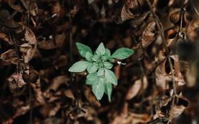 Картинка зелень, листья, макро, природа, диссонанс