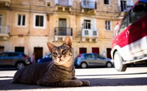 Обои дворовый, улица, кот