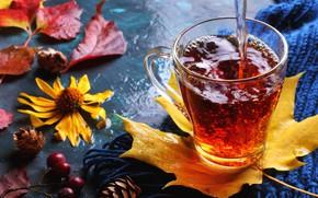 Обои напиток, чай, осень, листья