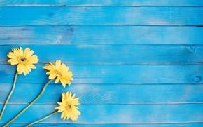 Картинка цветы, желтые, гербера