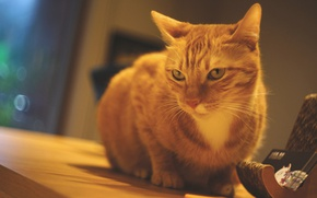 Обои кот, грустный, сидит, помещение, рыжий, подставка, стена, окно, стол, взгляд, кошка