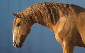 Картинка конь, лошадь, рыжий, грива, профиль