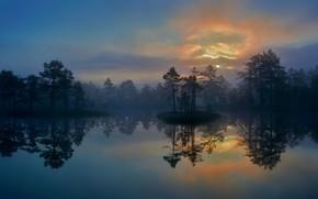Обои деревья, Вестманланд, болото, Швеция, озеро