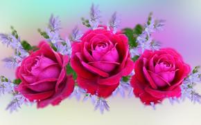 Картинка Kompozycja, kwiaty, Róża
