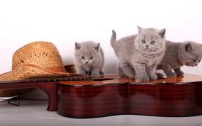 Обои гитара, шляпа, котята, британцы