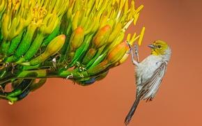 Картинка цветок, макро, птица, американский ремез