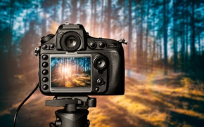 Обои Camera, light, forest