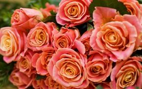 Картинка цветы, оранжевый, букет, Розы, бутоны