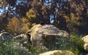 Картинка природа, камни, растительность, улитка, real rocks