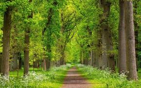 Обои весна, жорога, природа, деревья, зелень, пейзаж, красота