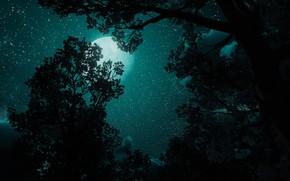 Картинка ночь, звёзды, Ведьмак, The Witcher 3