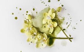 Картинка цветы, ветки, желтые, орхидеи
