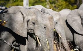 Картинка природа, африка, слоны