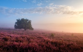 Картинка небо, туман, дерево, утро