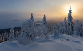 Картинка зима, снег, ёлки